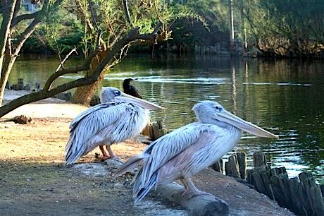 Vögel im Zoo Punta Verde von Lignano