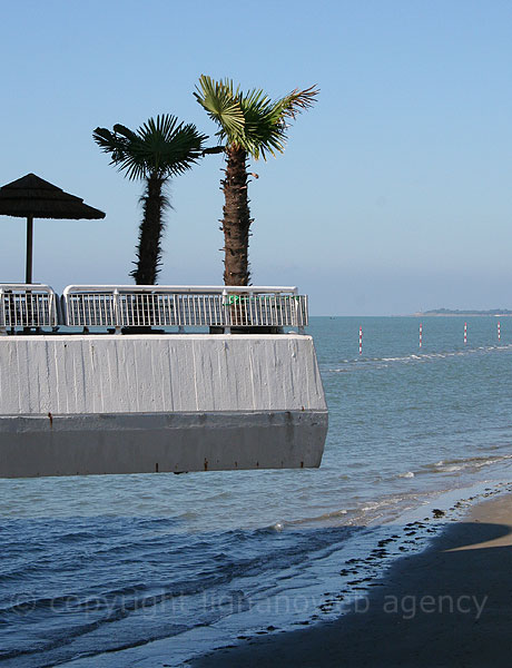 Palmtrees at Terrazza Mare Lignano Sabbiadoro